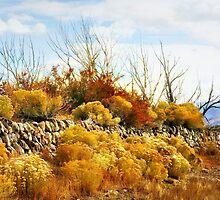 Rock Reservoir by Arla M. Ruggles
