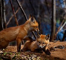 Lets Play Together by Thomas Young