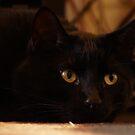 Dracula's eyes semi-original by agenttomcat