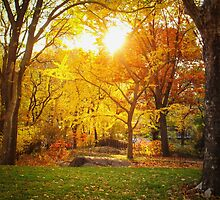 Autumn - Central Park - Sunset - New York City by Vivienne Gucwa
