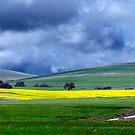 Stormy skies - South Australia by Jenny Dean