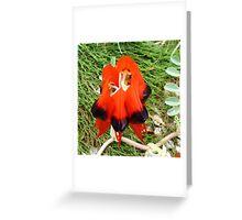 Australian Sturt Desert Pea Greeting Card