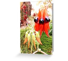 Sturt Desert Pea in bud and in bloom Greeting Card