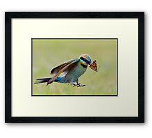 Rainbow Bee-Eater 453 Framed Print