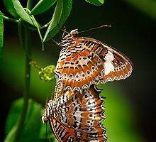 Twin Orange Lacewings by Amelia Chen