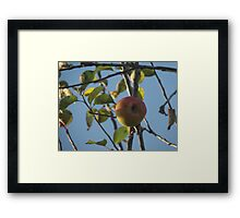 The Last Apple Framed Print
