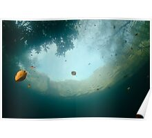 Autumn colours from below the water Poster