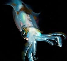 Squid at night lembeh strait by KenByrne