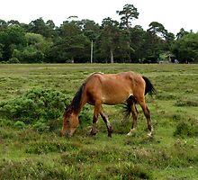 New Forest Pony by kostolany244