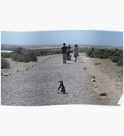 Caution: Penguin Crossing Poster