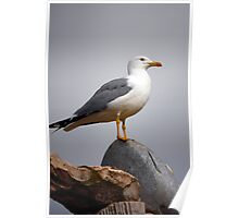 Bird on top Poster