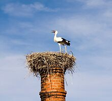 Stork on chimney by Mauro Rodrigues