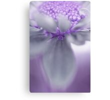 Awashed In Lavender Canvas Print