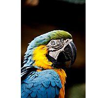 Macaw's head Photographic Print