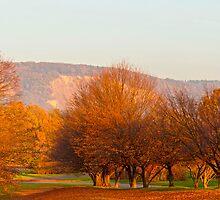 Rheinaue Park  by Vac1