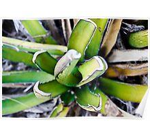 Macro desert plant Poster