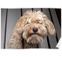 """Pet terrier """"Teddy"""". Poster"""