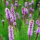 Purple Missles by Deborah Crew-Johnson