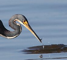 small catch by kathy s gillentine