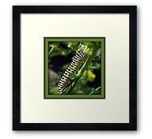 Caterpillar Sunbathing Framed Print