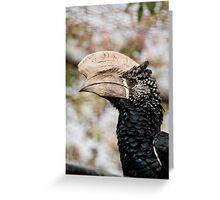 Trumpeter Hornbill Greeting Card