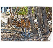Deer in Austin Zoo Poster