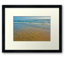Huntington beach rose Framed Print