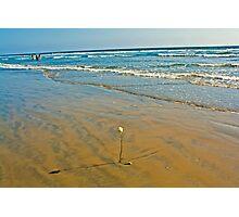 Huntington beach rose Photographic Print