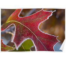 Frosty Leaf 2 Poster