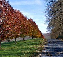 Autumn Country Row by Tom Gotzy