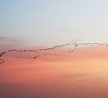 migration at sunset by Mauro Rodrigues