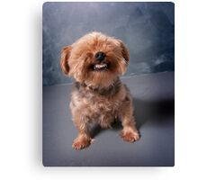 Yorkie Smiling Canvas Print