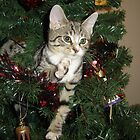 """I did it!"" - 1 tattered fir tree! by Christine  Treece"