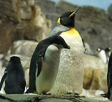 Penguin pride! by Rachelo