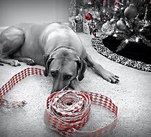 Blaze and the Ribbon by Karen Kilgallin