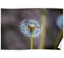 Dandelion Fairies Poster