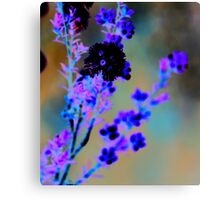 Australian wildflower - abstracted colours Canvas Print