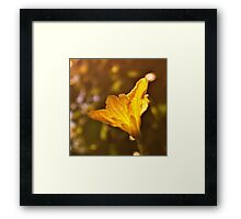 The yellow of the eye Framed Print