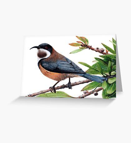 Eastern spinebill Greeting Card