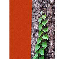 Creeper, Red, Tree Photographic Print