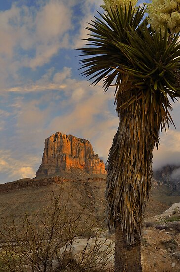 El Capitan At Sunrise - Guadalupe Mountains by Stephen Vecchiotti