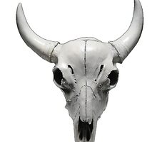 Cow Steer Skull , Photograph by IrenesGoodies
