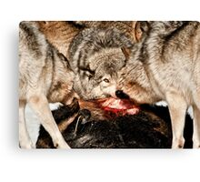 Eye of the Alpha Canvas Print