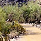Desert Trail by Anthony Sapone