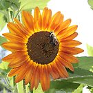 Sun Flower Menagerie by Deborah Crew-Johnson