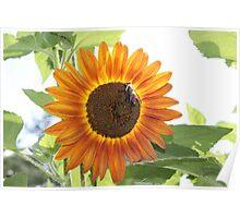 Sun Flower Menagerie Poster