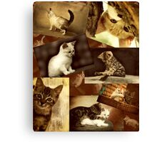 Cute Kittens at play - Collage Canvas Print