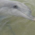 Dolphin at Monkey Mia,  by simonescott