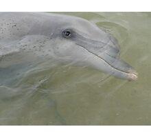 Dolphin at Monkey Mia,  Photographic Print