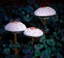 Three lil shrooms by redhairedgirl